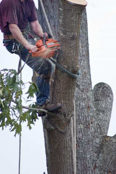 Tree removal and stump grinding commercial insurance.